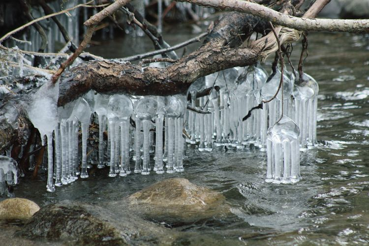 Icicles hanging from tree branches during winter