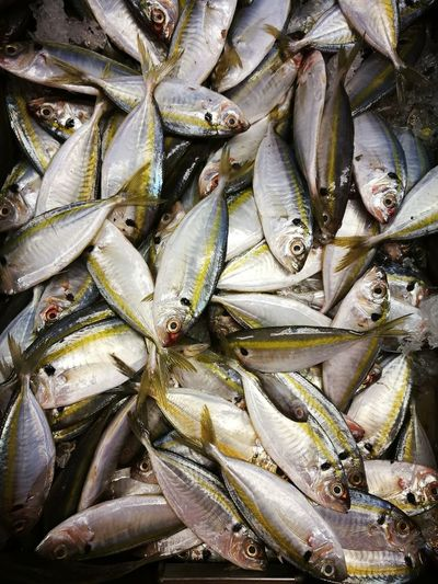 Abundance Animal Backgrounds Day Fish Fishing Industry Food Food And Drink For Sale Freshness Full Frame Healthy Eating High Angle View Large Group Of Objects Market No People Outdoors Raw Food Retail  Seafood Vertebrate Wellbeing