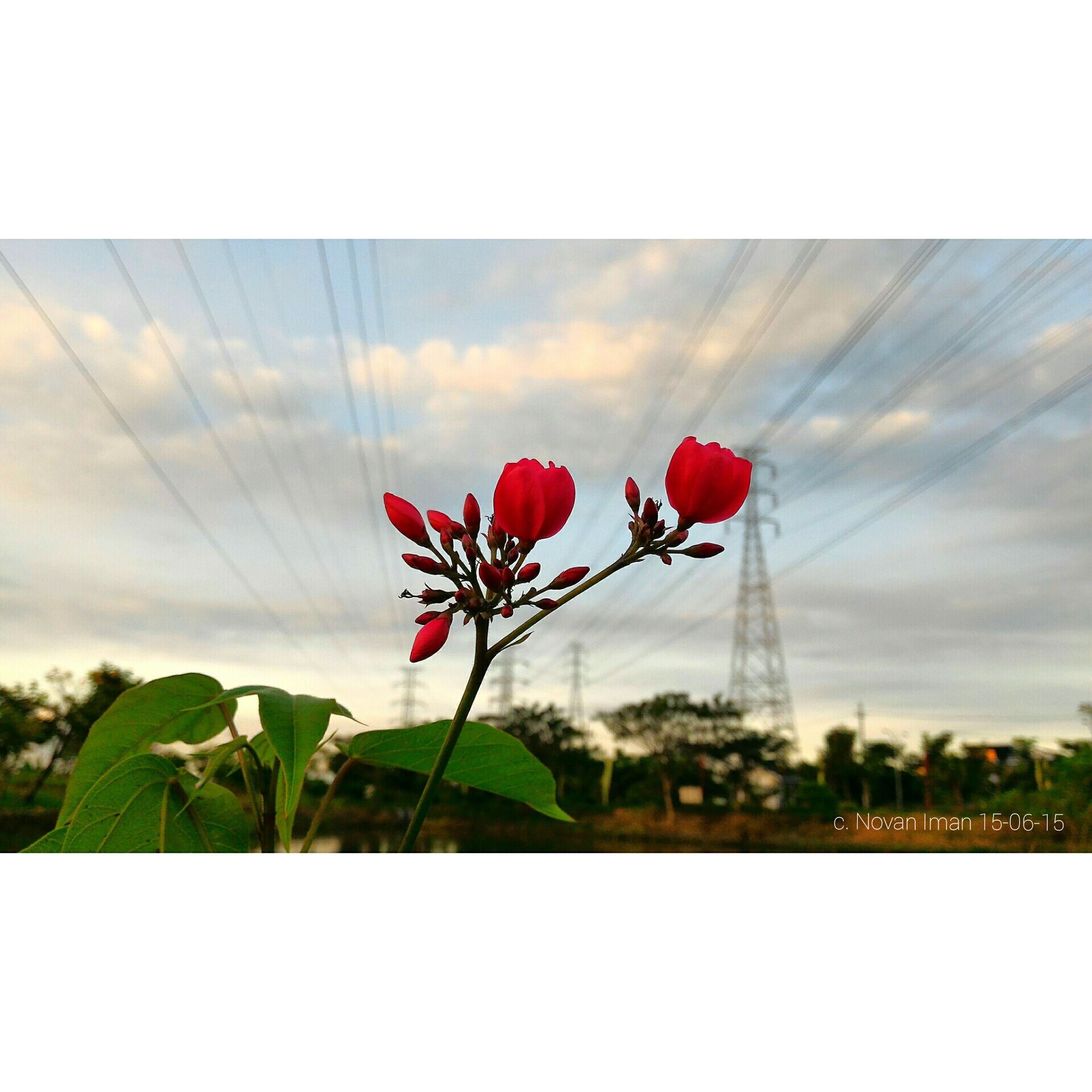 red, flower, sky, cloud - sky, pink color, growth, auto post production filter, freshness, built structure, plant, fragility, transfer print, nature, architecture, beauty in nature, day, petal, cloud, tree, outdoors