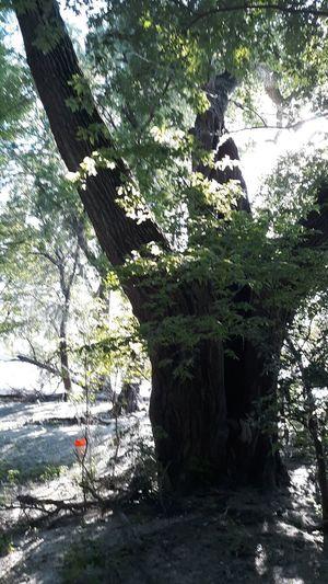 Tree Water Tree