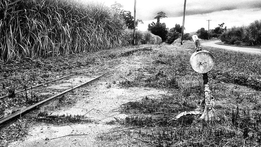 Train Tracks Old Train Tracks Taking Photos Smartphonephotography Afternoonwalk Tropics Blackandwhite Photography Blackandwhite Sugarcane Farmlife