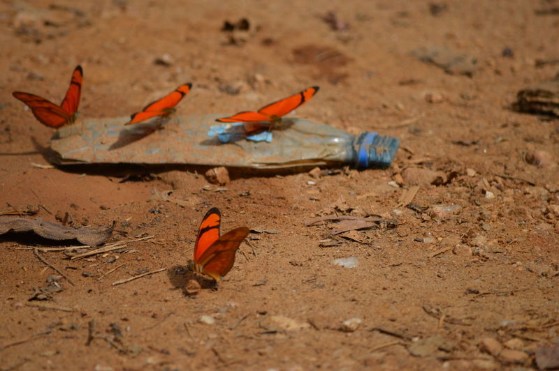Close-up of butterflies