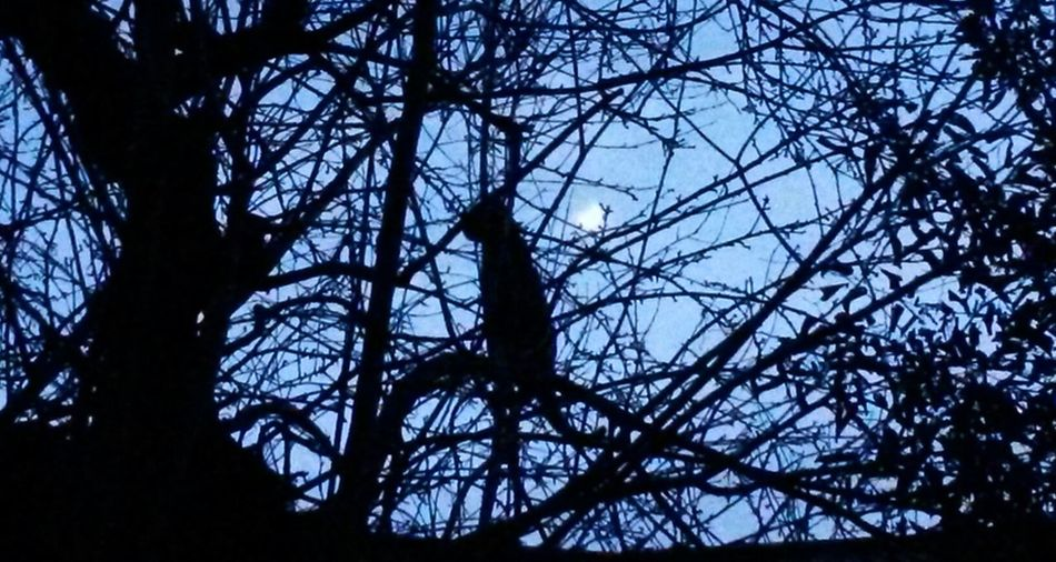 Streetphotography Light And Shadow Moon Cat silhouette of a cat sitting on a tree under a pale moonlight...