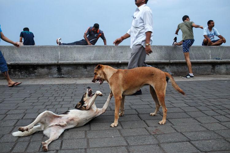 Morning activities at the waterfront promenade along Marine Drive in Mumbai, India. Street Streetphotography Street Photography India City Mumbai Fitness Activity Sport Exercising Dog Animal Outdoors The Street Photographer - 2017 EyeEm Awards