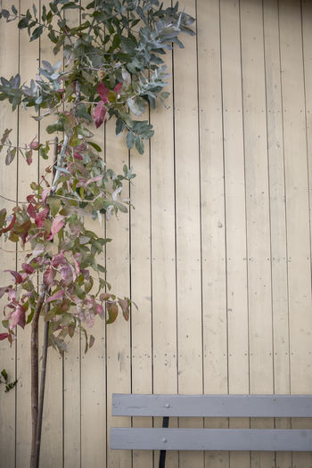 Low angle view of flowers blooming on wall