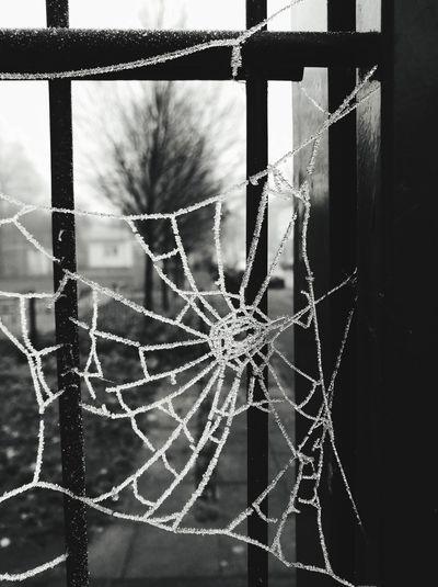 Focus On Foreground Crime Spider Web Spiderweb Spider Nature_collection Eyenaturelover Spiderweblines Spiderweb In Morning Dew Cold Cold Temperature Winter Wonderland Wintertime Bnw Bnw_collection Theeye