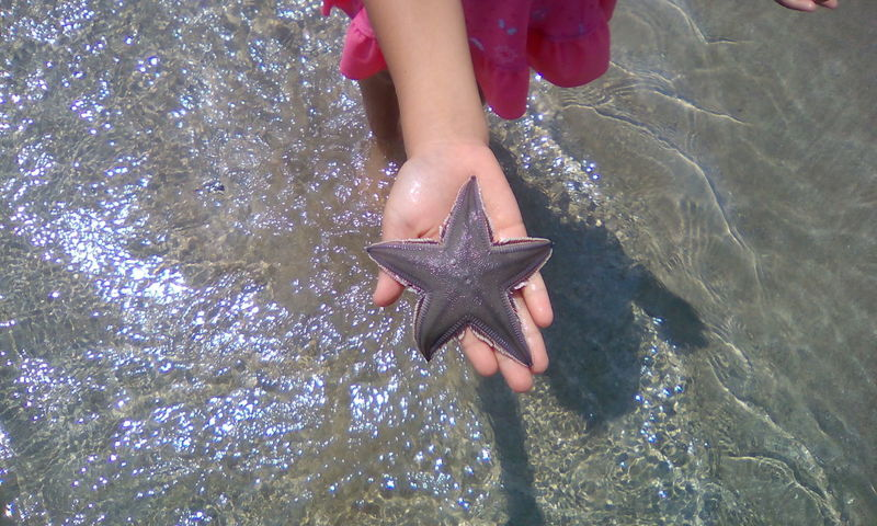 Beach Beauty In Nature Real People Sand Sea Life Star Shape Starfish  Sunlight Vacations Water