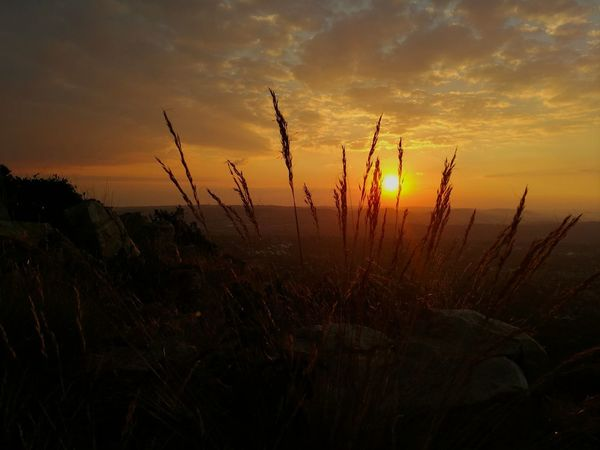 Sunset Nature Orange Color Landscape Outdoors Sunlight Beauty In Nature Gold Colored Sky Grass Grass And Sky Grasses And Sun