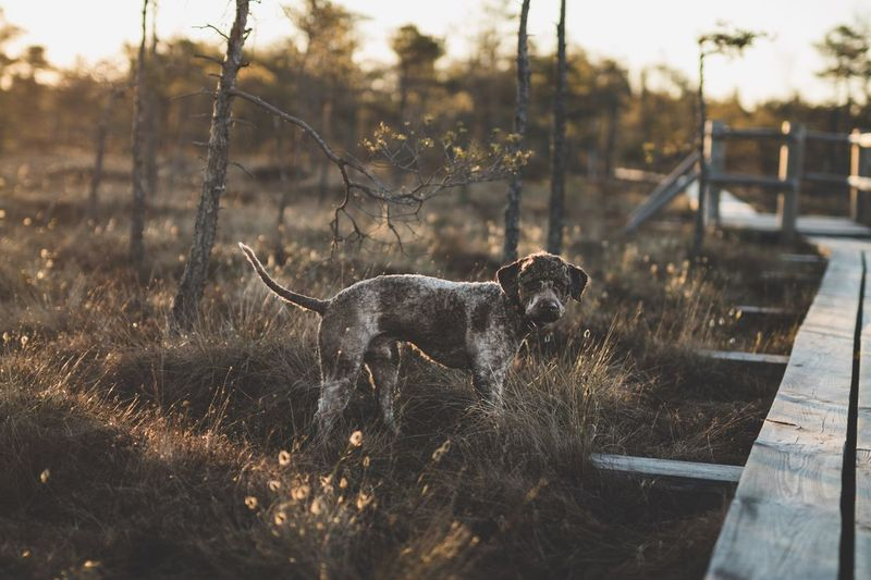 Lagotto Romagnolo | Sigma 50mm ART One Animal Animal Themes Dog Domestic Animals Mammal No People Pets Outdoors Day Nature Grass Sky The Great Outdoors - 2017 EyeEm Awards EyeEmNewHere Lagotto Romagnolo Latvia Park Animals Sunrise Nature Walking Tree Landscape The Great Outdoors - 2017 EyeEm Awards EyeEmNewHere Pet Portraits