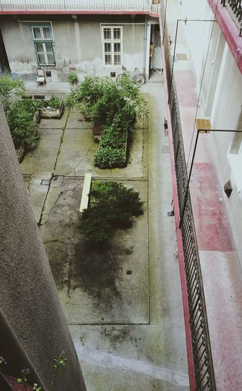 Courtyard  Inside Inside The Building Urban Garden Urban Jungle Plants Green 2nd Floor Downtown Old House Budapest Hungary VSCO Leica