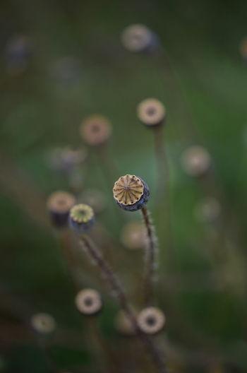 Close-up of flower bud on land