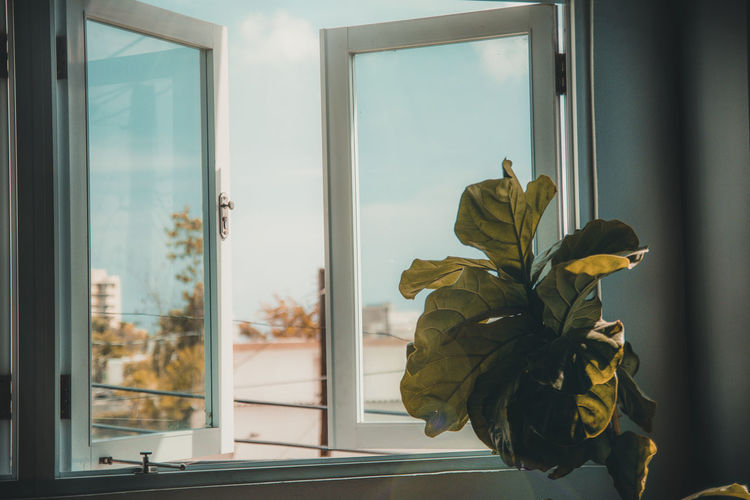 Close-up of potted plant by window at home