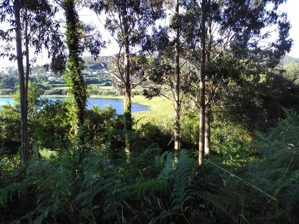 Laguna doniños