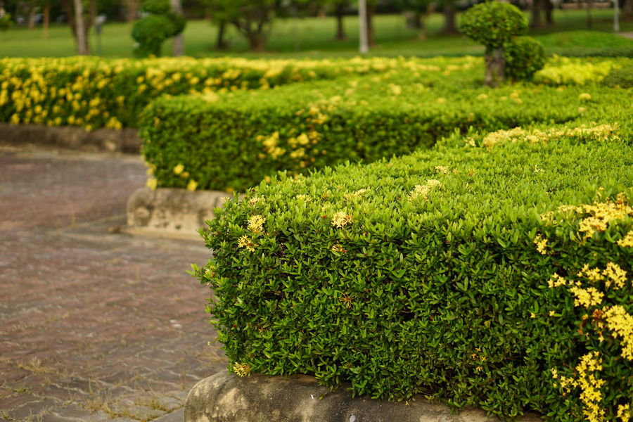 Tidy bush Plant Nature Green Color Outdoors Growth No People Beauty In Nature Landscape Flowerbed Day Grass Tree Freshness Spike Flower Yellow Flower Yellow Fragility Textured  Freshness Tide Bushes And Flowers Bush Bushy Park Exploring Nature Relaxing Moments