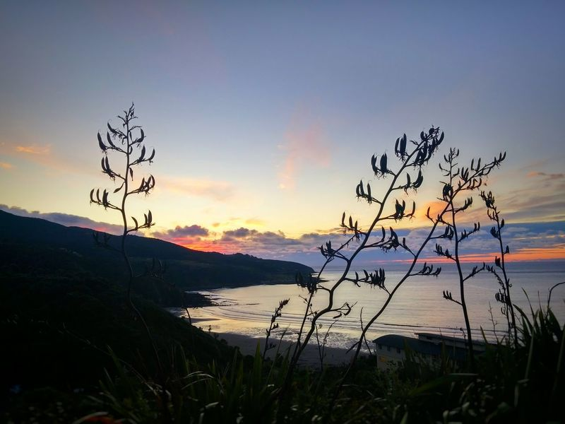 Last light 😍 Nzflora Surf's Up Beauty New Zealand Colour Image Sea Beach Photography Outdoors Natural Silhouette The KIOMI Collection Nature Raglan Nz Ocean View Surf Photography Showcase: February Horizon Over Water Mountains View From The Top 2016😍 Summer 2016 Paradise Pastel Power Engage Your Senses Soul Nourishment