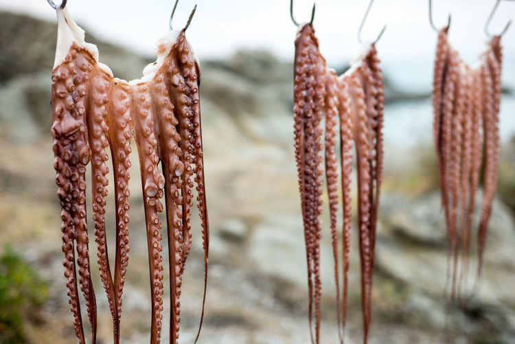 Close-Up Of Tentacles Drying On Hooks
