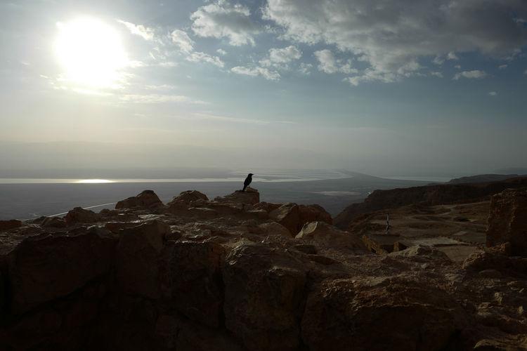Alone Alone Time Archeology Desert Jordan Nature Perspective Bird View Black Bird Dead Sea  History Israel Masada Negev  Roman Wars Ruin Sandstone Cliffs Stone Sun Sunrise Wild Life