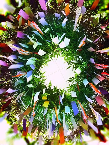 Tanabata (star) Festival in Japan today. Writing your wish on a piece of paper and hang it on a bamboo tree. May all our wishes come true...🎋 Festival Festive Season Festive Star Festival Star Bamboo Bamboo Trees Wish Wishes WishesDoComeTrue Tree TreePorn Peace Fairytale  Milkyway Galaxy Constellation Love