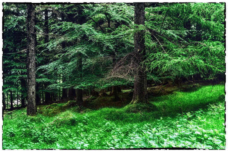 Beauty In Nature Cruagh Woods Day Dublin Dublin Mountains Field Forest Grass Grassy Green Green Color Growth Ireland Irelandinspires Ireland🍀 Landscape Lush Foliage Nature Outdoors Plant Scenics Tranquil Scene Tranquility Tree Tree Trunk