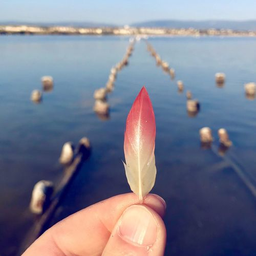 Flamingo Flamingo Water Human Body Part Hand Human Hand One Person Focus On Foreground Holding Close-up Nature Finger Body Part Real People Sea Day Human Finger Personal Perspective Unrecognizable Person Outdoors Beauty In Nature Small