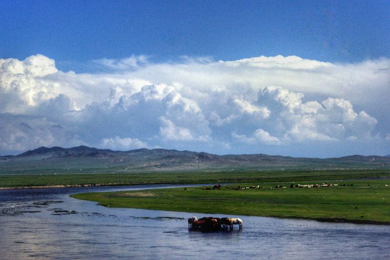 Mongolia Монгол улс Steppe Outdoors Day Beauty In Nature Orkhon River Horses Horizon Over Land Animal Themes Animals In The Wild Animal Wildlife Water Mountain Rural Scene Sky Landscape Cloud - Sky