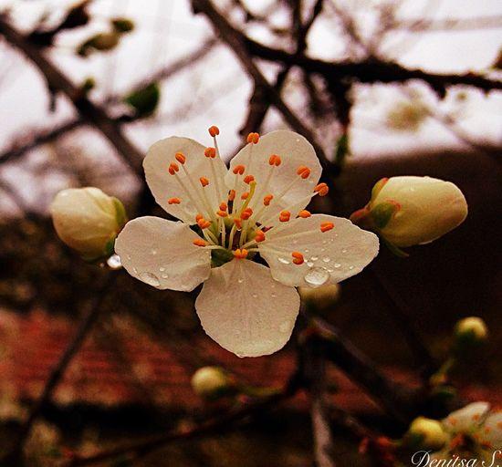 🌸🌸🌸 MyPhotography IPhone5 March Springtime Rainy Days Raindrops Rainy Day Rainy 24/100happydays Flowers Tree Fantastic Nature