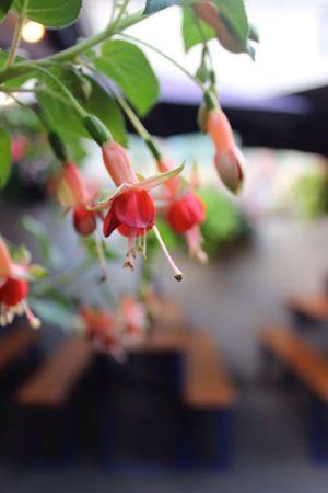 Flower Summer Nights EyeEm Best Shots