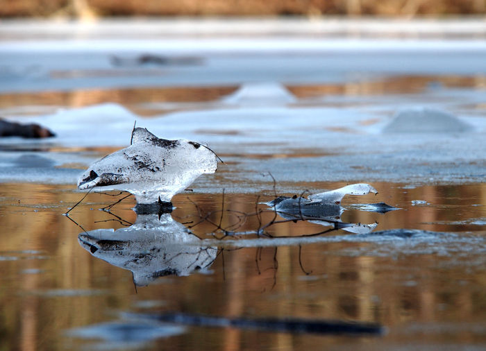 Close-up of ice crystals on lake during winter