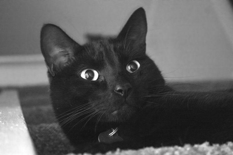 Ponderous black