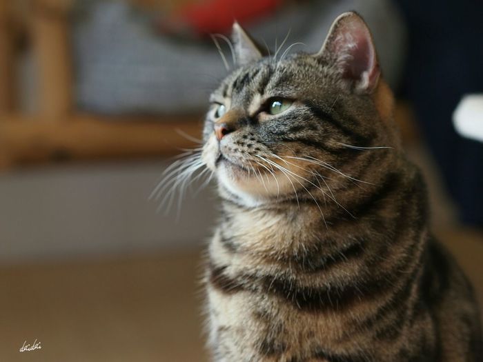 月曜日か。。。 E-PL3 Cat No Edit/no Filter My Zoom Up Thinking Of...
