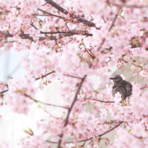 Low angle view of bird on cherry tree