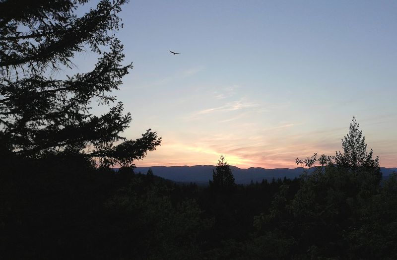 soaring near the sunset Sunset Silhouettes Sunset_collection Soaring Bird Soaring Up Above Southern Oregon That Tree Life Cathedral Hills Park Bout That Life Tree Sunset Silhouette Sky Landscape