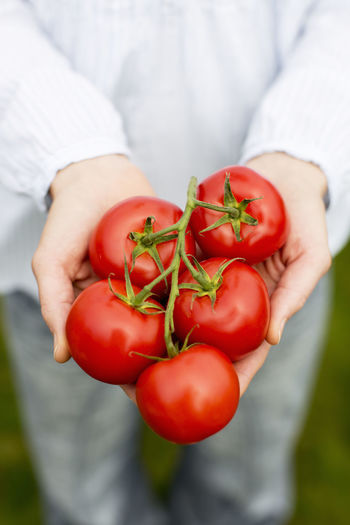 Close-up of hand holding cherry tomatoes