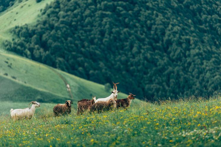 Meadows in ingushetia