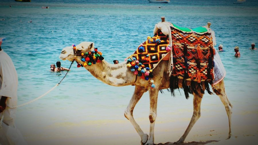 Hurghada Sea Holiday In Egypt Camel Riding