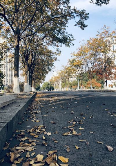 Autumn leaves on road in city