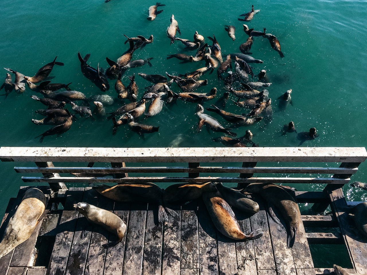 Seals on jetty and water