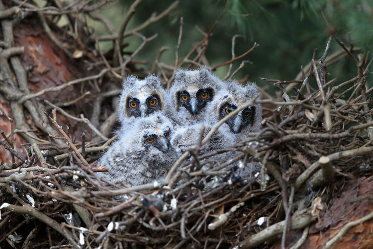 Close-up of a bird in nest