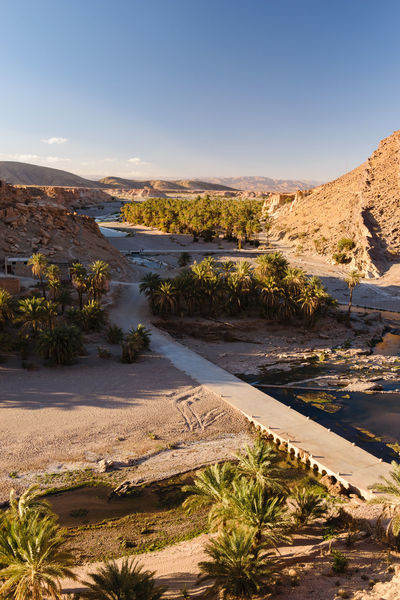 Oasis of Palm trees in the the Oued Tissint near Tata, Morocco. Gorge Moroccan Morocco Oued Palm Rock Tourist Travel Tree Adventure Africa Bridge Canyon Cliff Destinations Geology Landscape Maghreb Mountain Oasis River Tissint Tourism Valley Water