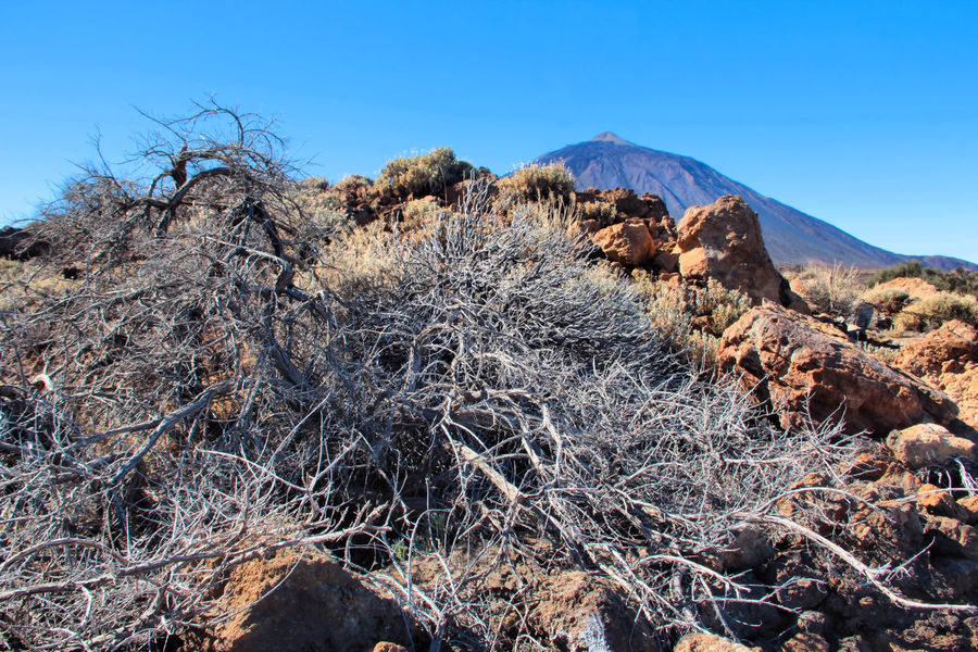 Arid Climate Bare Tree Beauty In Nature Blue Clear Sky Day Dryness Landscape Mountain Nature No People Outdoors Physical Geography Scenics Shrub Sky Teide Teide National Park Tenerife Tranquil Scene Tranquility Tree