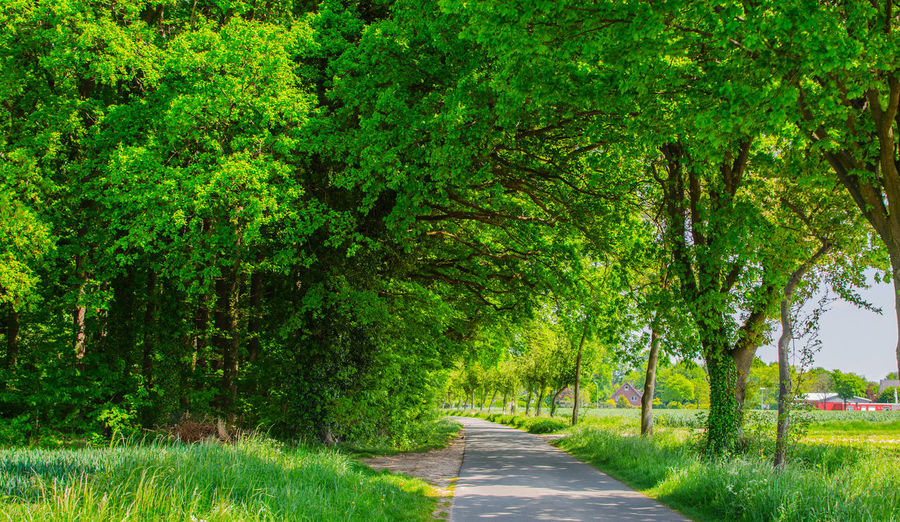 Road amidst plants and trees