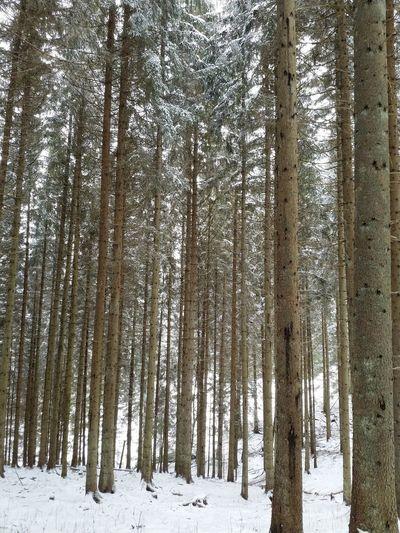 Winter Forest Forest Black Forest Hochschwarzwald Schwarzwald Blackforest Wald Waldspaziergang Hiking Winter Wandern