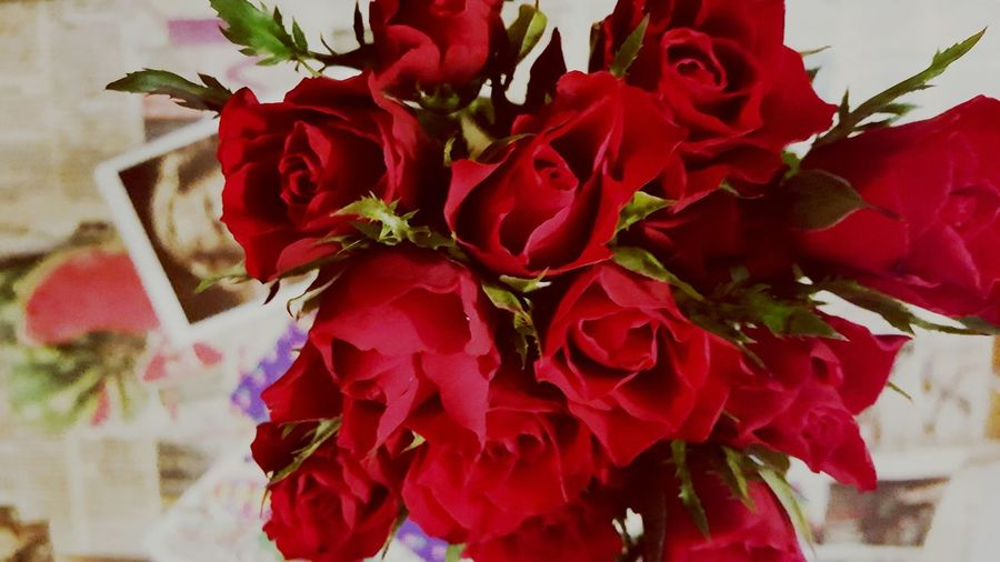 Roses🌹 Red Roses Velvet Roses Taking Photos That's Me That's My World Beauty In Ordinary Things Enjoying Life Home Sweet Home Showcase April Springtime Inspiration Memories