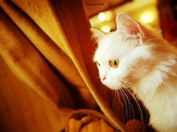Cat Cats 🐱 Cateyes Catseye Eyes Catseyes Eye Cat Looking Cute Pets Domestic Cat Domestic Animals One Animal Indoors  Cat Looking Through Window Animal Themes Cat Photography Lovely Cat 😻 Cute Cat 😻 Animal Eye Cats Of EyeEm Beauty Cat Cats Lovers  My Cat ❤ Totssy 😍