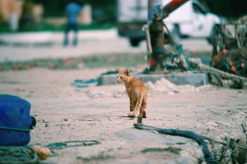 Full length of a cat on street