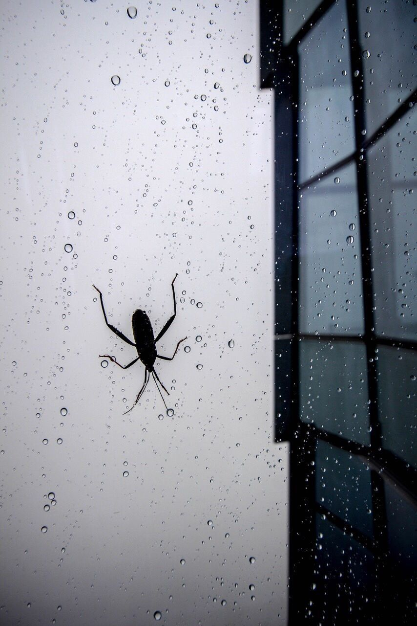 Insect On Wet Glass Window