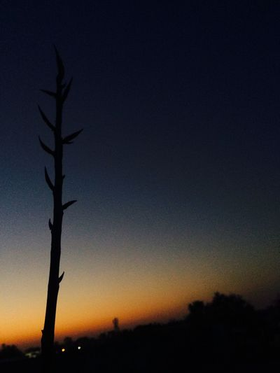Dusk 🌾🏜 An evening at terrace 😁 No Edit/no Filter Eyeemvision Eyeem Market EyeEm Nature Lover Plant Peepal Tree Sunsetphotographs Sunset_collection Sunset Sunset Silhouette Nature Beauty In Nature Sky Tree Scenics Tranquility Outdoors No People Tranquil Scene Night Bare Tree Landscape