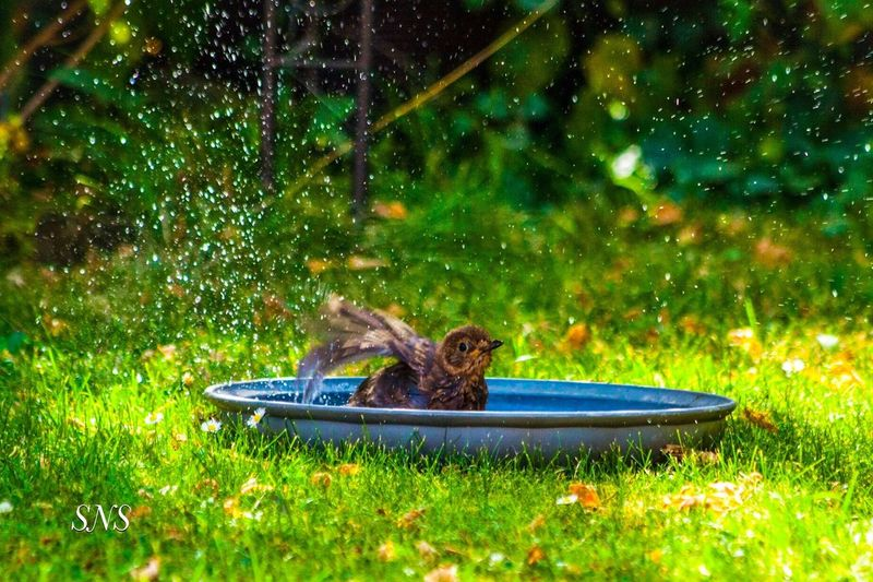 Vogel beim baden Plant Animal Animal Themes Grass Nature Green Color Animals In The Wild Vertebrate Animal Wildlife No People Water One Animal Mammal Growth Outdoors Motion Day Field High Angle View