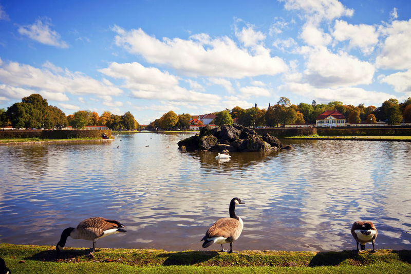 Panoramic view of the decorative lake in front of Nymphenburg Castle, with the artificial island, goose and swan in a beautiful autumn day Animal Wildlife Animals In The Wild Autumn Colors Beauty In Nature Bird Canada Goose Cloud - Sky Cloudscape Day Geese Grass Lake Lake View Landscape Munich Architecture Nature No People Nymphenburg Park Ornamental Pond Outdoors Sky Tree Water Water Bird Water Reflections