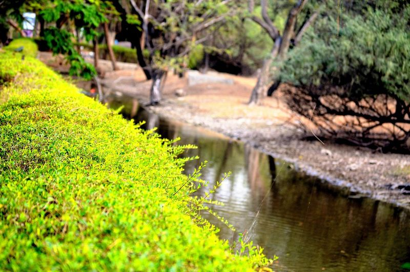 Grass Green Color Growth Leaf Nature Pond River River By Side River Side Water The KIOMI Collection